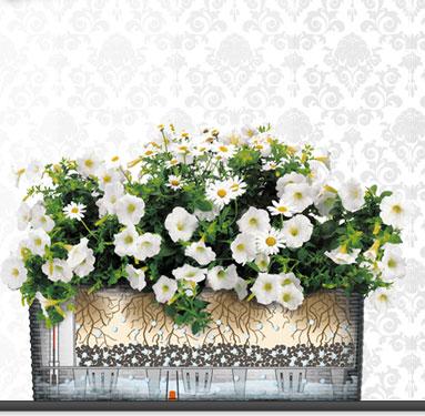 Живые цветы в спб купить цветы с теплицы фото и цены