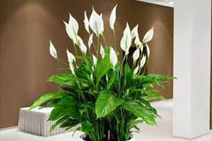 Где в питере можно купить комнатные цветы недорого заказ цветов онлайн хабаровск